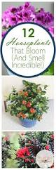 Easy House Plants Best 25 Easy Plants To Grow Ideas Only On Pinterest How To Grow