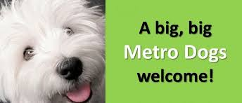 dog daycare downtown minneapolis doggy daycare metro dogs