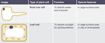 bbc bitesize ks3 biology cells to systems revision 4