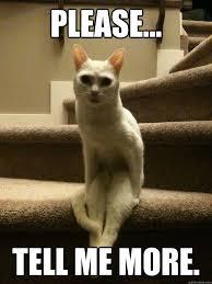 Tell Me Meme - please tell me more tell me more cat quickmeme