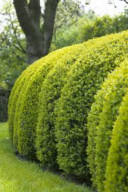 when to prune your garden pruning calendar for plants