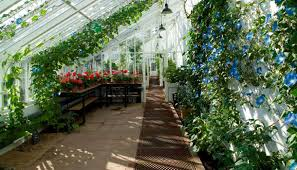 Garden Greenhouse Ideas 15 Most Popular Vegetables And Fruits To Grow In A Green House