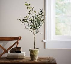small potted olive tree pottery barn