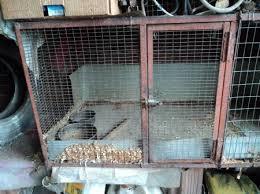 gabbia per pulcini gabbia in ferro per piccoli animali cana pulcini gabbie e revello