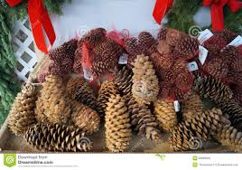 pine cones for christmas decorations stock photography image