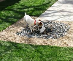 Great Backyard Ideas by 8 Great Backyard Ideas To Delight Your Dog The Bark