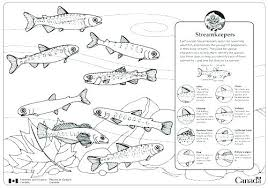 salmon fish coloring page salmon coloring page salmon fish coloring pages template king page