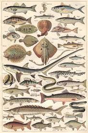 animal fishes from a 1922 volume of the french dictionary nouveau