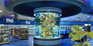 Home Aquarium by Albany Plattsburgh Glens Falls Saratoga Custom Aquarium Design