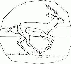 gazelle coloring pages for preschool and kindergarten