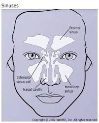can sinus infection cause dizziness light headed sinus headaches symptoms and treatment