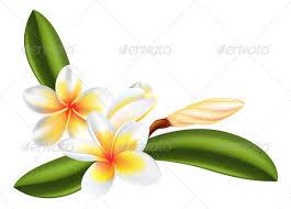 plumeria flower frangipani or plumeria flower by krisdog graphicriver