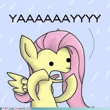 Seal Meme Gay - my little brony gay seal my little pony friendship is magic