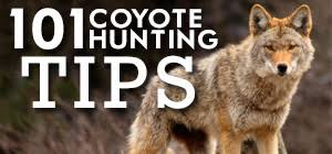 Coyote Hunting Lights 101 Coyote Hunting Tips How To Hunt Coyotes Best Predator Tricks