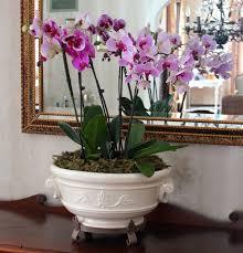 beautiful indoor plants cool indoor plants cool office indoor plants singapore