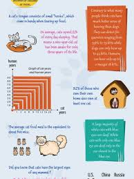 Anatomy Of A Cats Eye Cat Anatomy Visual Ly