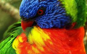 vital l full spectrum light for birds full colour birds and their plumage all you need is biology