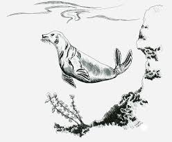 swimming seal by birthmark1 on deviantart