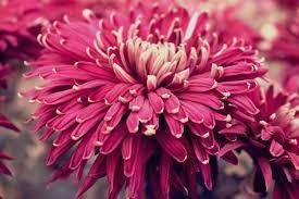 fiori viola bellissimi fiori viola scaricare foto gratis