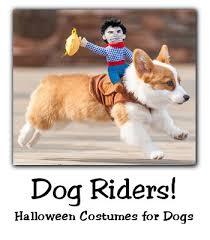 Kitten Halloween Costumes Pet 25 Pet Costumes Dogs Ideas Halloween