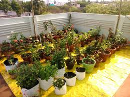 roof terrace kitchen garden at low budget in chennai chennai