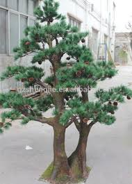 small decorative pine trees landscaping pine trees guangzhou