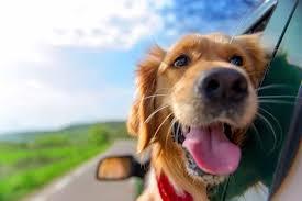 traveling with pets images Traveling with pets northshore veterinary hospital bellingham wa jpg
