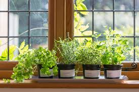 herbs and groceries by apartment gardening as indoor kitchen