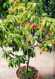 Blackmoor Fruit Trees - plant fruit trees to make your garden complete telegraph