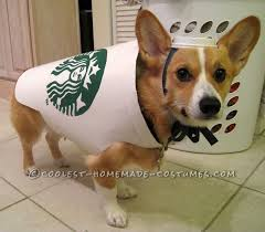 costumes for dogs starbucks dog costume easy and inexpensive starbucks costumes