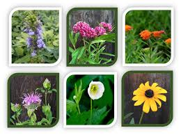 native ontario plants plant packs ontario native plants