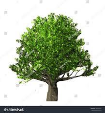 White Oak Tree Oak Tree Isolated On White Background Stock Illustration 389345974