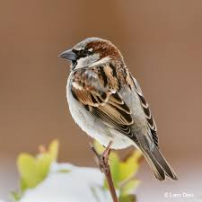 Texas birds images 12 birds every texan should know tpw magazine august september 2014 jpg