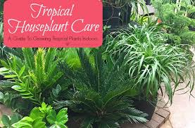 Common Tropical House Plants - houseplant care a guide to growing tropical plants indoors