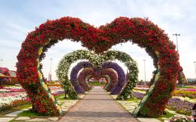 the world u0027s biggest flower garden sits in the middle of a desert