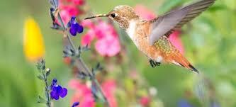 Hummingbird On A Flower - 5 flowers to attract hummingbirds doityourself com