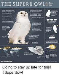 Superb Owl Meme - the superb owl superbowl was facial discsstiffeathers that