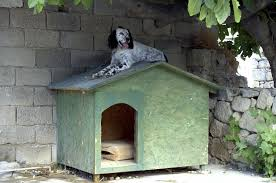 Are Igloo Dog Houses Warm How To Keep A Dog House Cool In Summer Animals Mom Me