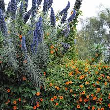 Southern Garden Ideas Southern California Gardening Through The Seasons
