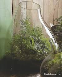 roost recycled glass bubble terrarium extra large u2013 modish store