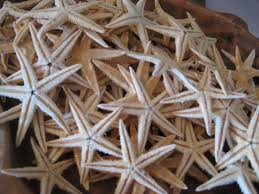beach decor natural philippine mini starfish 10 starfish