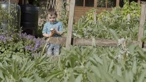 a little boy is watering his granddads vegetable garden and