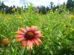 south carolina native plants pollinator propagators workshop audubon south carolina