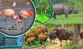 Wildlife tours odisha explore the flora and fauna 993 702 7574