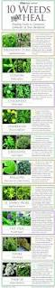 programs natural resources weeds and medicinal plants you can grow in your backyard outdoors