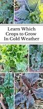 what to grow when cool season versus warm season plants