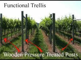 Trellis Wine Grape Trellis Systems Youtube