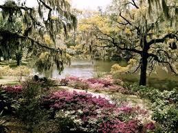 South Carolina landscapes images Plantation biographies jpg