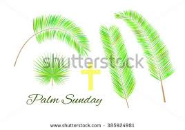 palm leaves for palm sunday palm sunday leaf vectors free vector stock