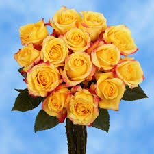 yellow roses with tips vibrant bright yellow roses with tips global